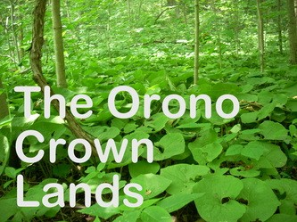 Orono Crown Lands Trust