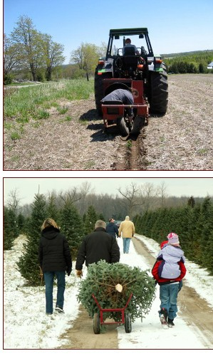 Wintersinger's Tree Farm